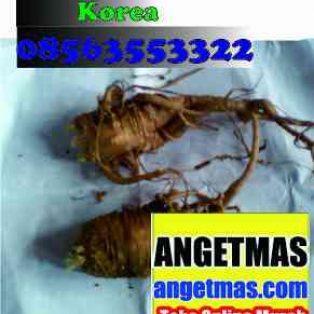 Akar Ginseng Merah Korea Segar Untuk kesehatan dan pengobatan, aneka manfaat ginseng