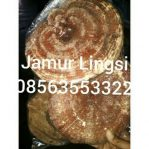Jamur lingzhy