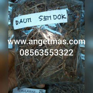 Daun Sendok atau daun ki urat Untuk kesehatan / jual daun sendok kering