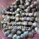 Bawang tunggal atau bawang lanang untuk kesehatan