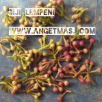 Biji lempeni / biji tanaman daun lempeni