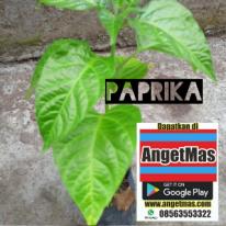 tanaman paprika atau tumbuhan paprika