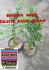 Bibit tanaman bidara arab dapat 2 bibit tanaman bidara arab