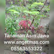 InShot_20171020_160129375-480×480