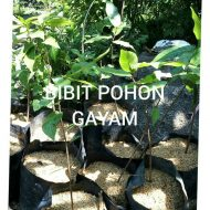 Bibitpohongayam_1.jpg