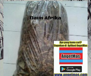 daun afrika kering