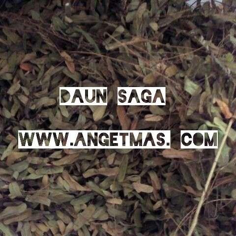 daun saga
