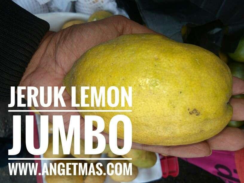 Jual tanaman Jeruk lemon 🍋