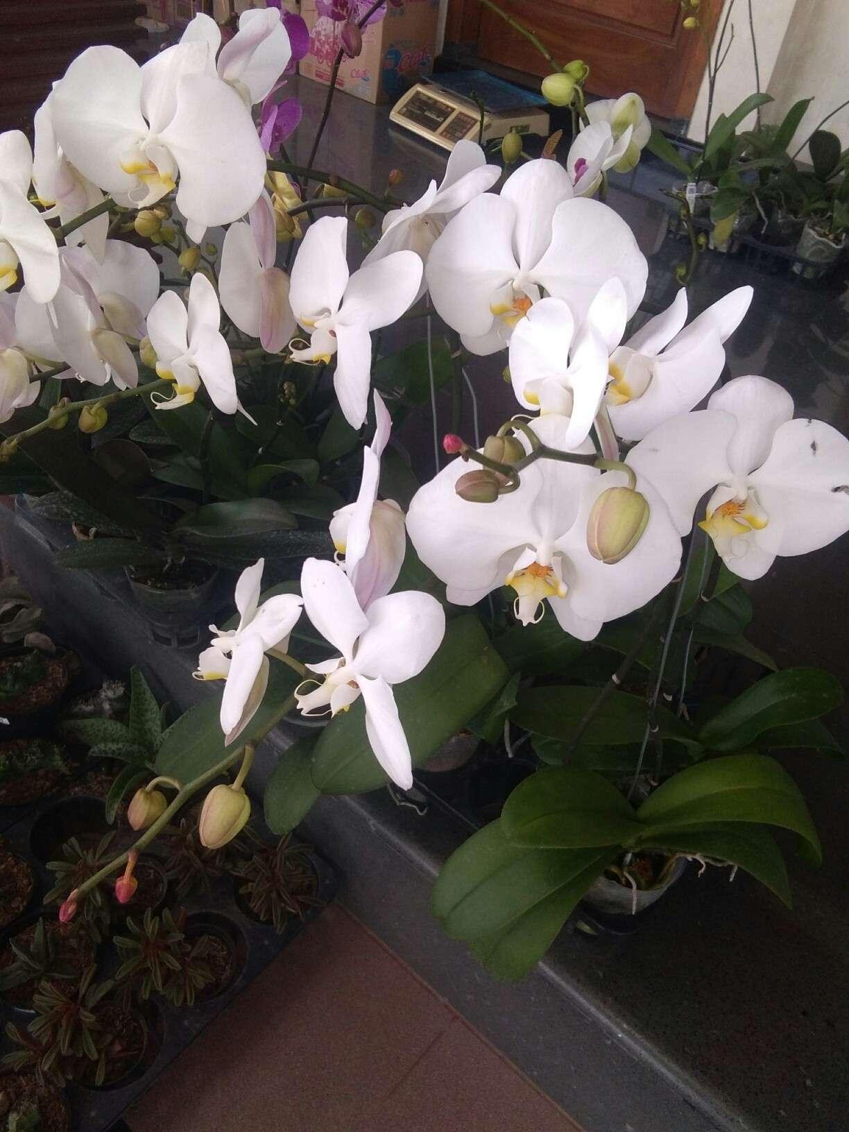 Jual Aneka tanaman bunga anggrek