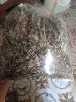 Jual daun baru cina