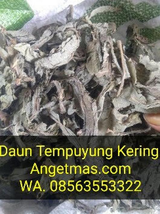manfaat daun tempuyng