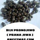 Manfaat Biji Pronojiwo