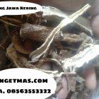 Ginseng Jawa Kering