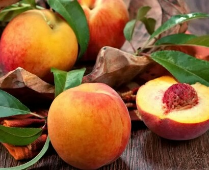 Jual Bibit tanaman buah persik