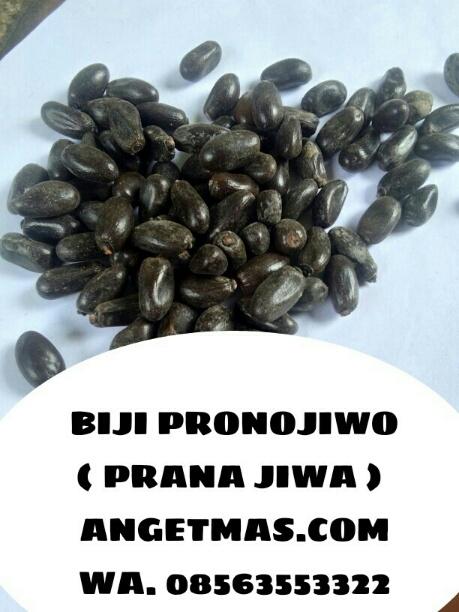 Pranajiwa